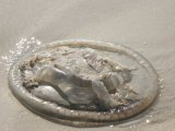 Patong Jellyfish: Other Beaches Plagued, Too