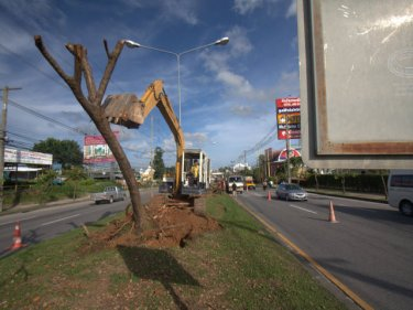 Down goes another of the Phuket trees, to be replaced by palmyra