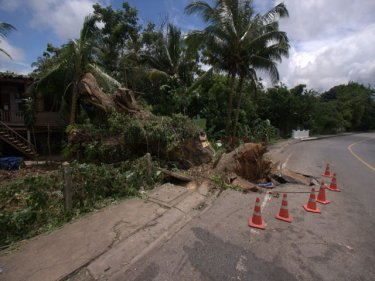 This giant Phuket City tree survived in the surface of Damrong Road until a week of steady rain let it to topple close to a house