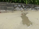 Planet Phuket: Save the Beaches from Bad Water, Greed and Self-Interest