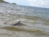Jet-Skis Herd Imperiled Patong Dolphins Out to Sea
