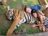Tiger Kingdom Tourist Attraction Set to Roar on Phuket