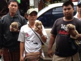 Patong Raiders Net Three Slow Loris Touts