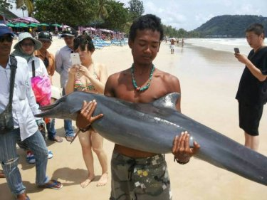 The dolphin couldn't be saved at Phuket's Patong beach