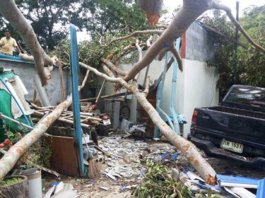 More storms of the kind that toppled a Banyan tree are forecast for Phuket