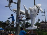 Dolphin Protesters Win Best of Phuket Award for Environmental Excellence