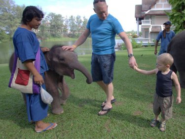 One small Phuket elephant is suddenly all that activists want to save