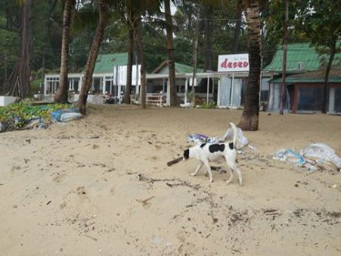 Surin beach in low season: now it will be closed for three days in high season